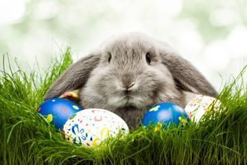 bunny_qv1xfl