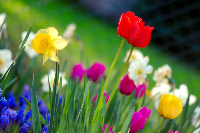 Colorful_spring_garden
