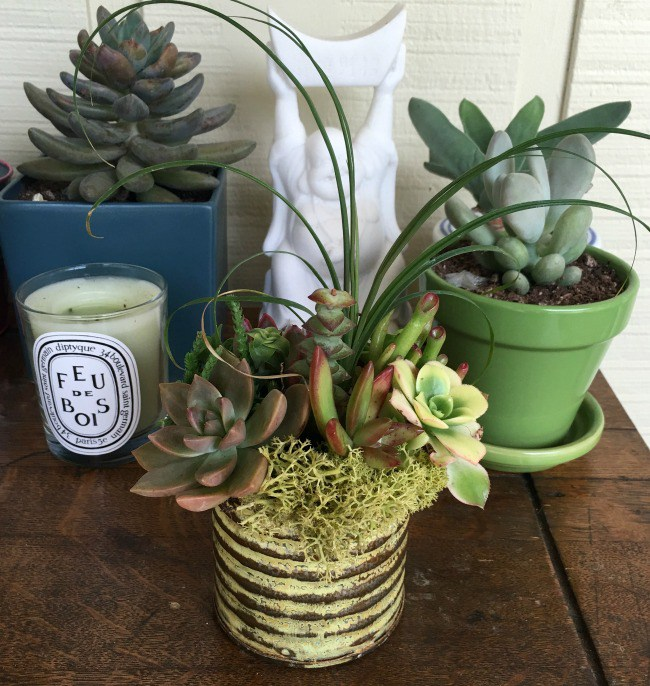 New-succulent-