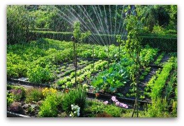 xwatering-large-garden.jpg.pagespeed.ic.E_iizxStz7