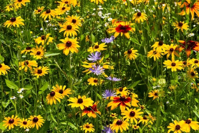 165_Wildflowers