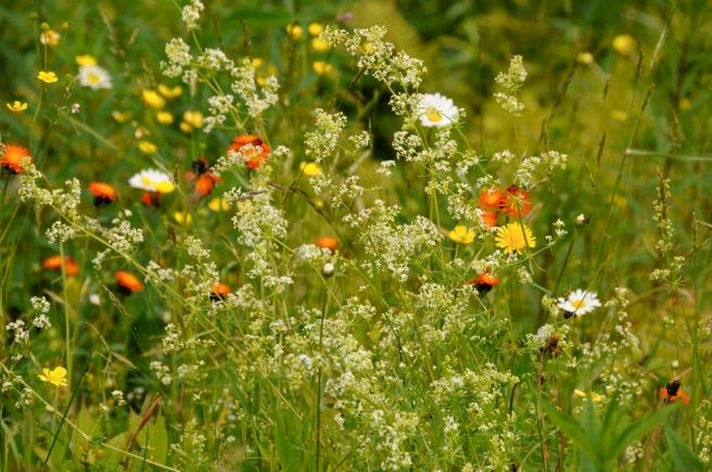 Flowers 40-00-00956