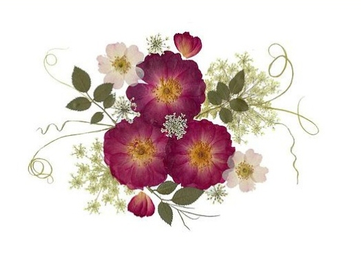 pressed flower 5