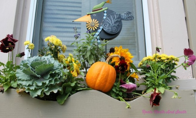 window-box-peek-wm-700x423