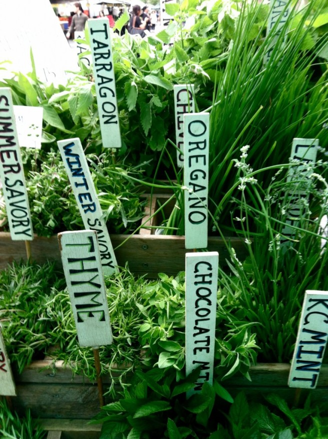 herbs-764x1024