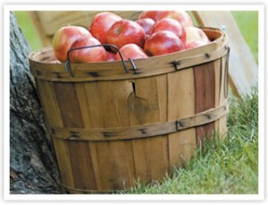 bushel-of-apples-300x229