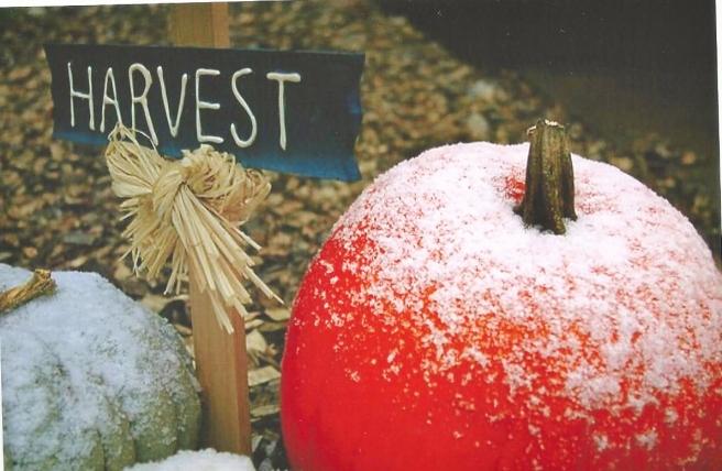 frost pumpkin