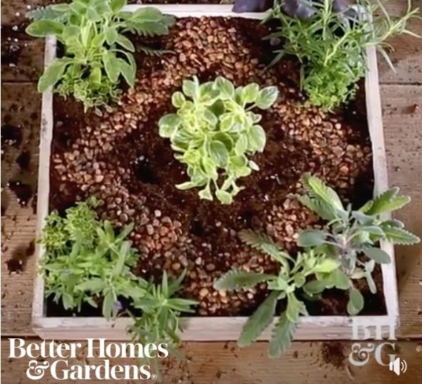 miniature herb